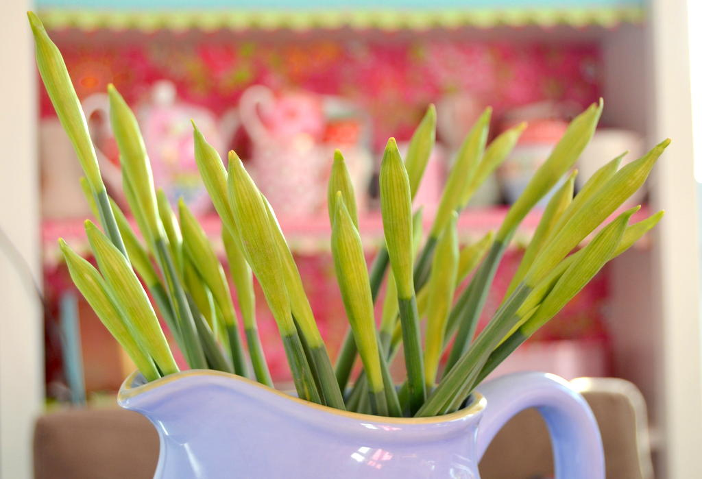 Bring the Spring into your home